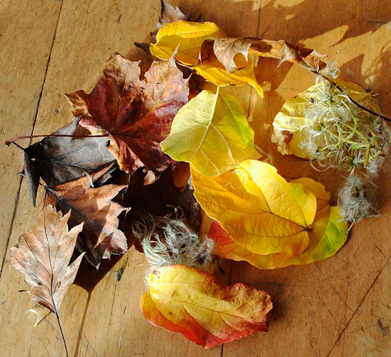 Collect your leaves and select the colours for your confetti