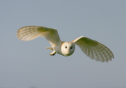 folly-farm-owl.jpg