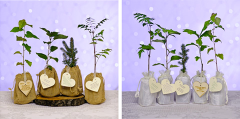 tree-seedling-wedding-favours.jpg